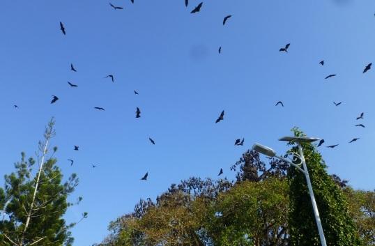 bats 162
